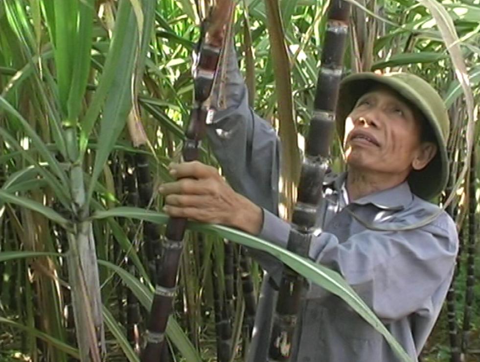 """Người cao tuổi huyện Cao Phong phát huy vai trò """"Tuổi cao - Gương sáng"""""""